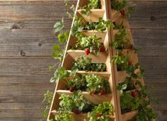 Fontaines à fraises : Rendements records sur petits espaces !