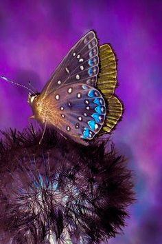 Papillon fleur noire Butterfly Colors, Butterfly Flowers, Butterfly Wings, Beautiful Butterflies, Butterfly Quotes, Butterfly Wallpaper, Flower Tattoos, Wallpaper Backgrounds, Moth
