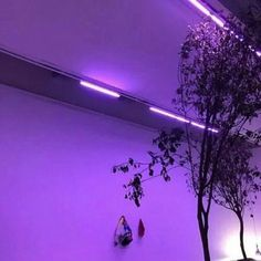 Ideas for neon lighting roxo Neon Purple, Purple Haze, Shades Of Purple, Light Purple, Magenta, Violet Aesthetic, Purple Aesthetic, Lavender Aesthetic, Night Aesthetic