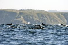 """Our """"dive camp"""" is actually two houses near the beach. There are no fancy hotels on this part of the coast. Dolphins, South Africa, Mountains, Nature, Pictures, Travel, Beautiful, Photos, Naturaleza"""