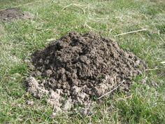 Krety, nornice, karczownik, mysz polna - zwalczanie Felder, Outdoor Decor, Dom, Gardening, Home Decor, Animal, Wall, World, Crete