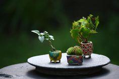 手のひらに乗る小さな四季。ミニ盆栽の楽しみ方とお手入れ方法を教えます。