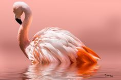 Flamingo-2010 by George Lenz