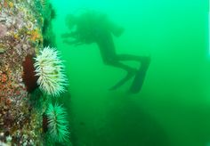 California Department of Fish and Wildlife Wants Your Photos of MPAs