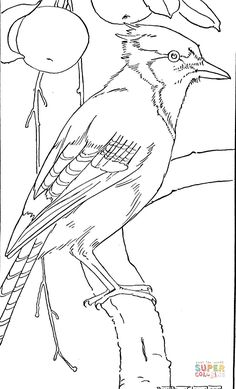 Jay Bird Coloring Page From Category Select 24659 Printable Crafts Of Cartoons Nature Animals Bible And Many More