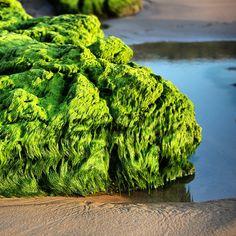#Suances #playadeloslocos #loslocos #rocas #playa #Beach #Spain #Cantabria