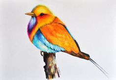 Exotic bird 2  Original Colored Pencil drawing by PrismaticArt, $65.00