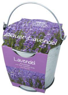 Pflanzset in Zinkeimer, Lavendel - Blauer Lavendel - Erfreut Auge und Nase, gut als Bienennahrung. Legen Sie das Saatgut auf die Erde, leicht andrücken, angießen und gleichmäßig feucht halten.Material