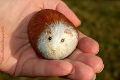painted Rock - guinea pig by Buntes SteinAtelier