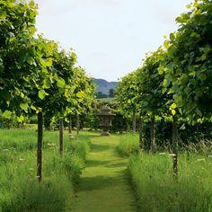 Tree lined garden pathway | Garden inspiration | Garden trees | Image | Housetohome