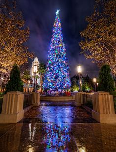 1000+ images about Disney Christmas on Pinterest   Disney ...