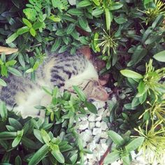 No soy  vago, solo descanso por un tiempo indefinido. Grrr Plants, Fotografia, Photography, Plant, Planets