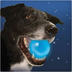Description What Our Top Dog Says About The LED Dog Ball: The Niteize Light Up Dog Ball is an LED powered dog ball that is both bright and durable. Our customer's love this ball and has become one of Up Dog, Dog Id, Pet Ball, Dog Gadgets, Led, Dog Park, Dog Supplies, Dog Treats, Dog Toys