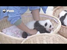 The Happiest Job Ever: A Panda Nanny