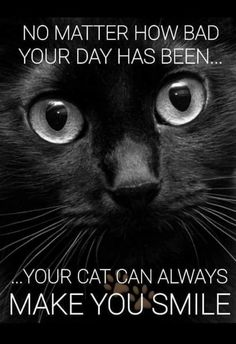Cats 101, Cats And Kittens, Cat Quotes, Animal Quotes, Crazy Cat Lady, Crazy Cats, Animals And Pets, Cute Animals, Kinds Of Cats