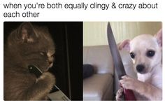 17 Memes Youll Understand If Youre In A Healthy Loving Relationship - Relationship Funny - What better way to express your love than through memes? The post 17 Memes Youll Understand If Youre In A Healthy Loving Relationship appeared first on Gag Dad. Girlfriend Humor, Boyfriend Humor, Boyfriend Girlfriend, Steve Harvey, Funny Relationship Memes, Cute Relationships, Tumblr Funny, Funny Memes, Memes Humor