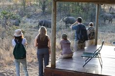 Viewing some Elephants walking past one of the Tents at Shindzela.