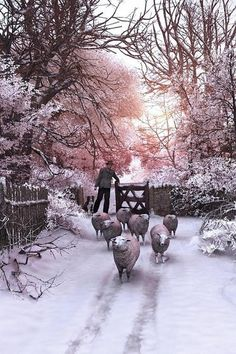 Winter Flock coming Home ....