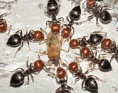 KREATIVNE IDEJE: Ovaj trik će vas riješiti i najveće najezde mrave