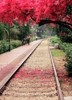 summer scenery in travel season, Xiamen, China #travel #summer #photography