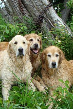 Bentley, Brie and Tyler