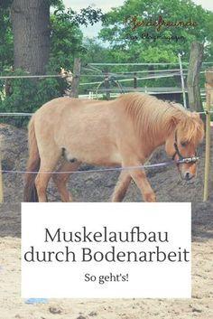 Muskelaufbau durch Bodenarbeit - auch Longieren und Spaziergänge stärken Muskulatur und Kondition deines Pferdes