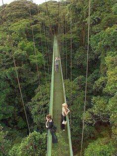 Monteverde Rain Forest, Costa Rica