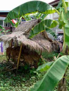 Bananas and Shanty Shacks at Ko Kret Bangkok Small Island, Garden Bridge, Bananas, Kos, Bangkok, Hawaiian, Thailand, Outdoor Structures, River