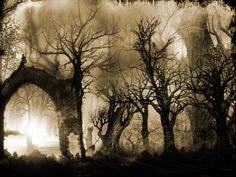 Gothic Forest #dark #haunting #art