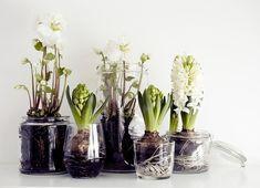 Maison Jars-Plants