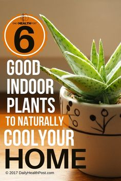 6 Plants that Will Help Keep Your House Naturally Cool via @dailyhealthpost