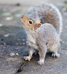 squirrel by tim-uk, via Flickr