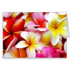 Image result for hawaiian flowers