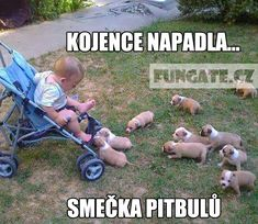 Enjoy our baby memes collection! a selection of hilarious, weird, silly and witty babies related memes. New funny baby memes added daily! Funny Dog Captions, Funny Animal Pictures, Funny Photos, Funny Images, Funny Dogs, Funny Animals, Cute Animals, Web Images, Cute Puppies