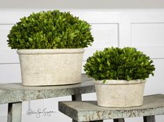 Preserved while freshly picked, natural evergreen foliage looks and feels like living boxwood potted in mossy, stone finished terracotta planters. Sizes: S-10x8x6, L-14x12x8