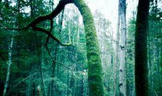 #photography #trees #outside #flora #maine #mainetrees #murphyempiredesign #inspiration #oldtree #hauntedtree #hauntedwoods #woods #photo #moss #spring