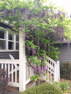 Outdoor Decor Tip # 6: Plant a knockout vine in your flower bed! Plant Wisteria