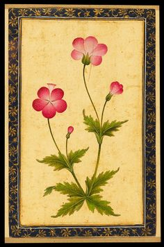 """Pink Composite Flower with Leaves (front)."" © Ashmolean Museum, University of Oxford. Mughal Paintings, Indian Paintings, Botanical Flowers, Botanical Prints, Flowers Wallpaper, Turkish Art, Guache, Hand Art, Botanical Illustration"