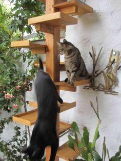 Katzentreppenfoto