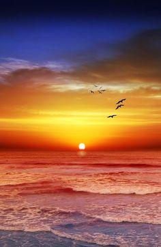 Beautiful view  nature   sunrise    sunset  #nature  https://biopop.com/
