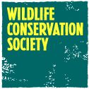 Wildlife Conservation Society (WCS):   Founded in 1895, has the clear mission to save wildlife and wild places across the globe. Our story began in the early 1900's when we successfully helped the American bison recover on the Western Plains. Today, we protect many of the world's iconic creatures here & abroad, including gorillas in the Congo, tigers in India, wolverines in the Yellowstone Rockies, and ocean giants in our world's amazing seascapes. http://www.wcs.org/