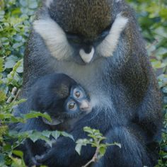 baby animals love GIF by San Diego Zoo