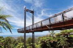 Forest Sky Pier - Orara East State Forest - Coffs Harbour, New South Wales #Australia #travel
