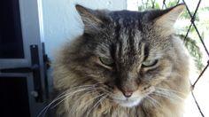 Aristus um amor de gato!
