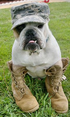 Army and Navy   BaggyBulldogs