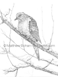 Pencil Drawings Of Animals, Animal Sketches, Bird Drawings, Realistic Drawings, Love Drawings, Drawing Birds, Pencil Sketch Drawing, Drawing Eyes, Pencil Drawing Tutorials