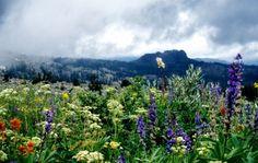 The Biota of North America Program - North American Vascular Flora
