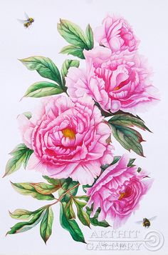 painted images of pink peonies Peony Drawing, Peony Painting, Watercolor Drawing, Watercolor Flowers, Watercolor Paintings, Botanical Drawings, Botanical Illustration, Botanical Flowers, Botanical Prints