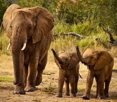 Elephants via www.Facebook.com/PositivityToolbox