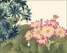 Small Japanese Flower Garden IV by Konan Tanigami
